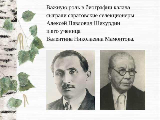 Важную роль в биографии калача сыграли саратовские селекционеры Алексей Павло...
