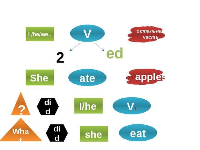 Специальный вопрос I /he/we.. V остальная часть 2 ed She ate apples ? I/he V1...