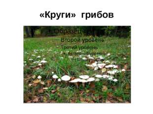 «Круги» грибов