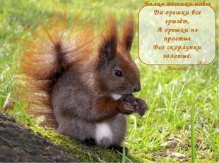 Белка песенки поёт Да орешки все грызёт, А орешки не простые Все скорлупки зо