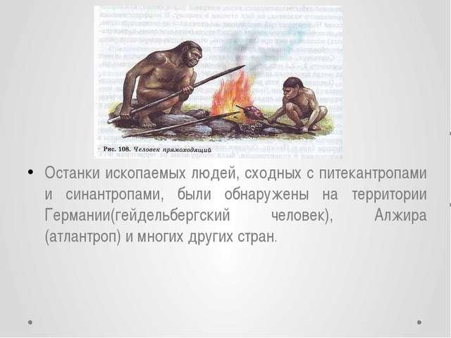 Останки ископаемых людей, сходных с питекантропами и синантропами, были обнар...