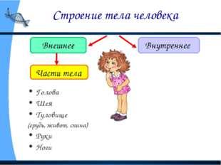 Строение тела человека Внешнее Внутреннее Голова Шея Туловище (грудь, живот,