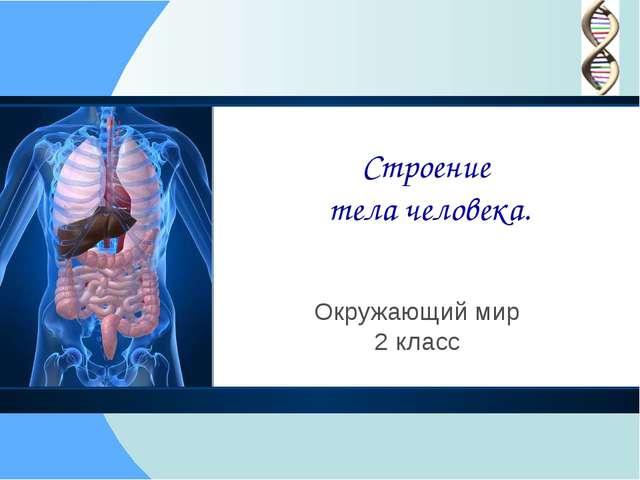 Строение тела человека. Окружающий мир 2 класс