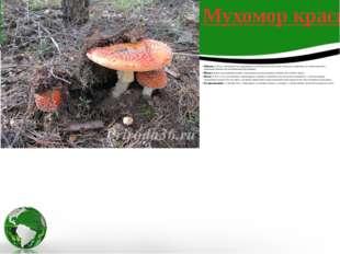 Шляпка5-18 см, толстомясистая, шаровидная, позже выпуклая или почти плоская,
