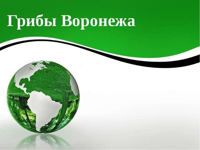 Грибы Воронежа