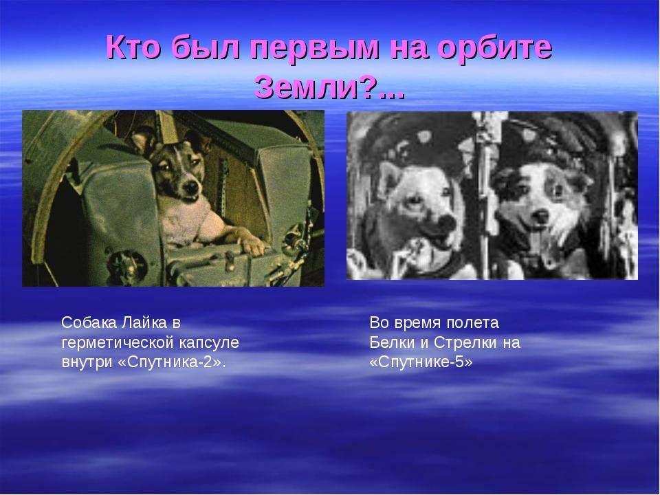 Кто был первым на орбите Земли?... Собака Лайка в герметической капсуле внутр...