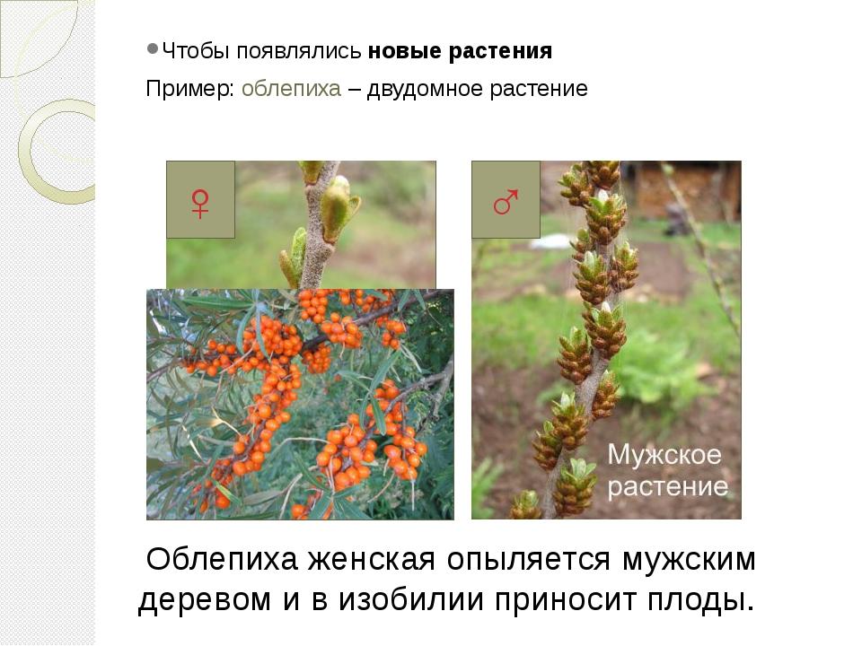 """Презентация по природоведению на тему """"Как размножаются живые организмы?"""" (5 класс)"""