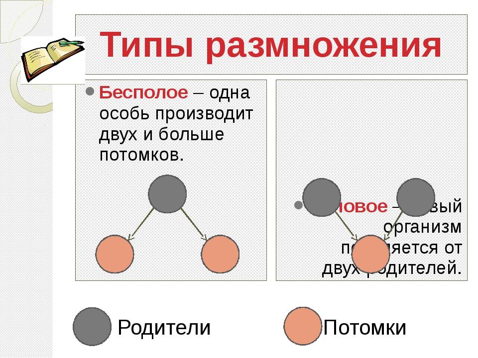 Типы размножения Бесполое – одна особь производит двух и больше потомков. Пол...