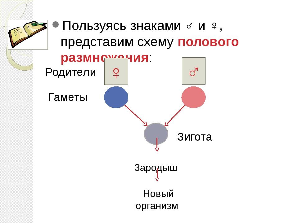 Пользуясь знаками ♂ и ♀, представим схему полового размножения: ♀ ♂ Родители...