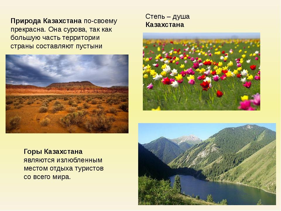 Степь – душа Казахстана Природа Казахстана по-своему прекрасна. Она сурова, т...