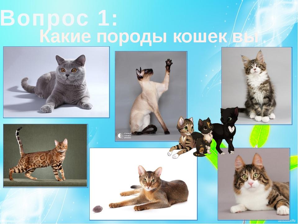 Вопрос 1: Какие породы кошек вы знаете?