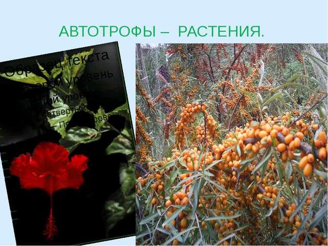 АВТОТРОФЫ – РАСТЕНИЯ.