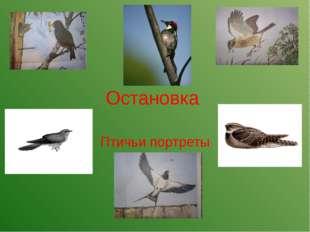 Остановка Птичьи портреты