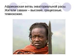 Африканская ветвь экваториальной расы. Жители саванн – высокие, грациозные, т