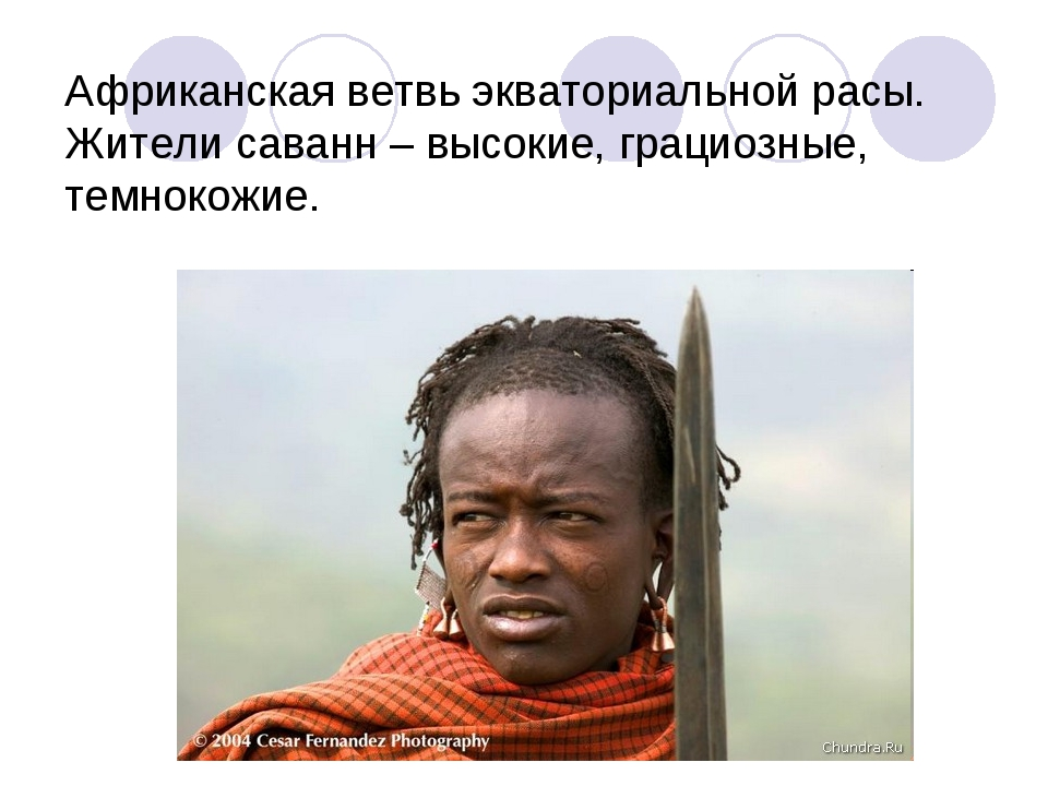 Африканская ветвь экваториальной расы. Жители саванн – высокие, грациозные, т...