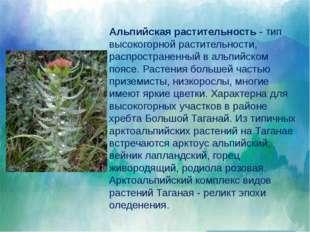 Млекопитающие представлены шестью отрядами из девяти, обитающих в России. На
