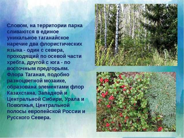 """Ветреницаили анемона, род растений сем. лютиковых. На территории НП """"Тагана..."""