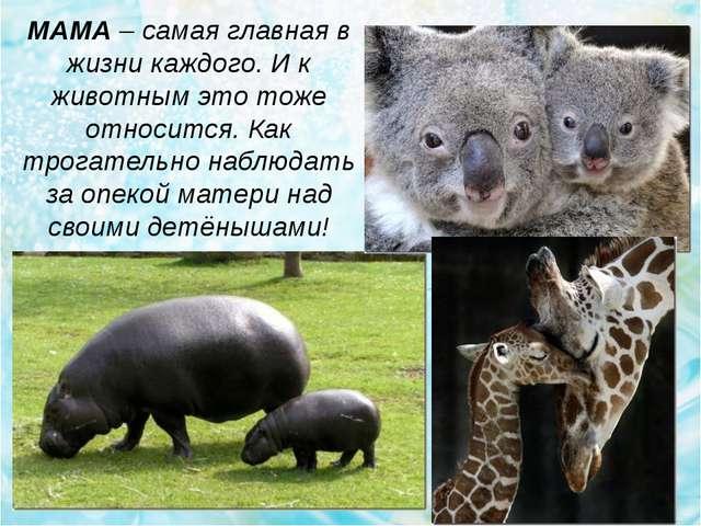 МАМА – cамая главная в жизни каждого. И к животным это тоже относится. Как тр...