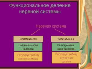 Функциональное деление нервной системы Нервная система Соматическая Вегетатив