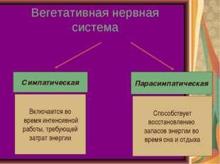 Вегетативная нервная система Симпатическая Парасимпатическая Включается во вр