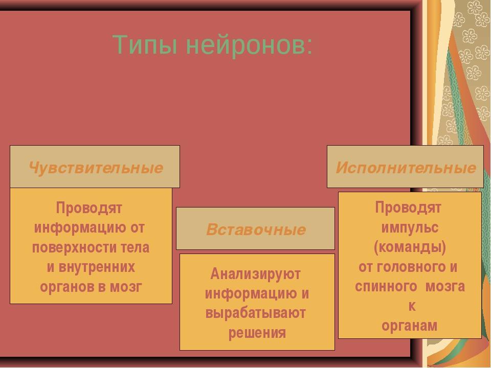 Типы нейронов: Чувствительные Вставочные Исполнительные Проводят информацию о...
