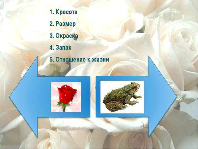 1. Красота 2. Размер 3. Окраска 4. Запах 5. Отношение к жизни