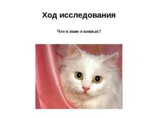 Ход исследования Что я знаю о кошках?