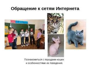 Обращение к сетям Интернета Познакомиться с породами кошек и особенностями их