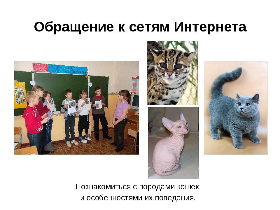 Обращение к сетям Интернета Познакомиться с породами кошек и особенностями их...
