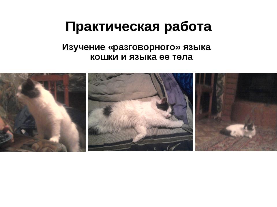 Практическая работа Изучение «разговорного» языка кошки и языка ее тела