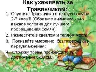 Как ухаживать за Травянчиком: Опустите Травянчика в теплую воду на 2-3 часа!