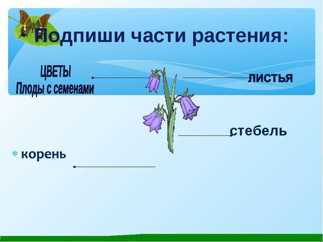 Подпиши части растения: стебель