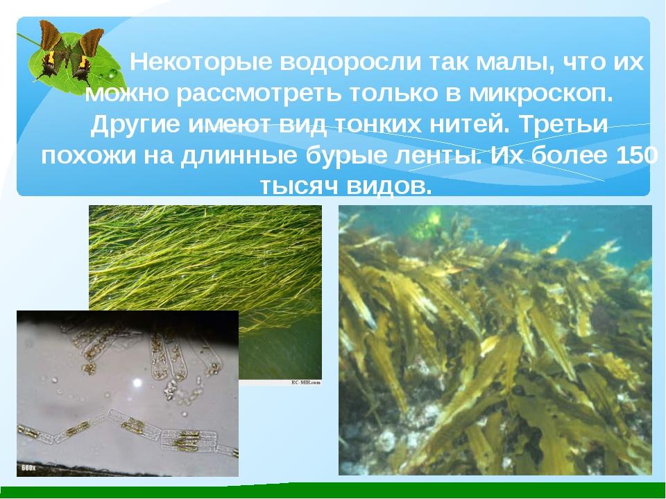 Некоторые водоросли так малы, что их можно рассмотреть только в микроскоп....