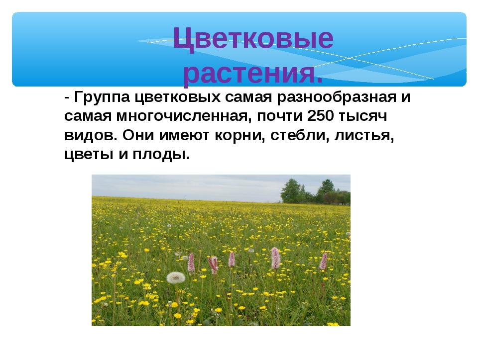 Цветковые растения. - Группа цветковых самая разнообразная и самая многочисле...