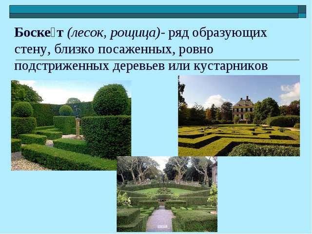 Боске́т (лесок, рощица)- ряд образующих стену, близко посаженных, ровно подст...
