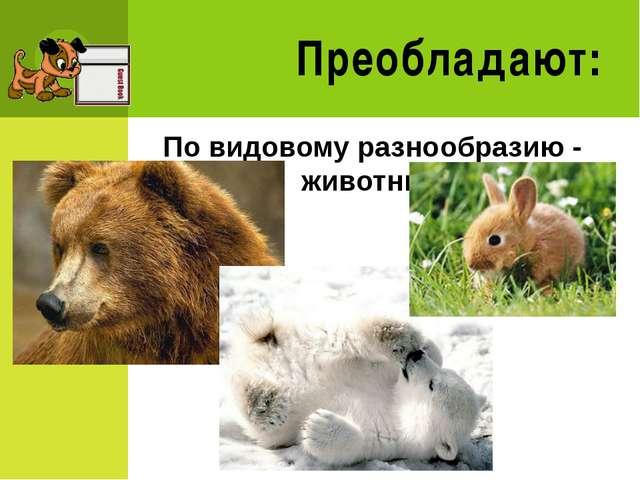Преобладают: По видовому разнообразию - животные