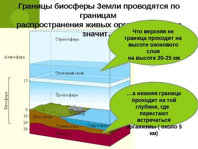 Презентация по экологии Что такое биосфера класс  Границы биосферы Земли проводятся по границам распространения живых организмо