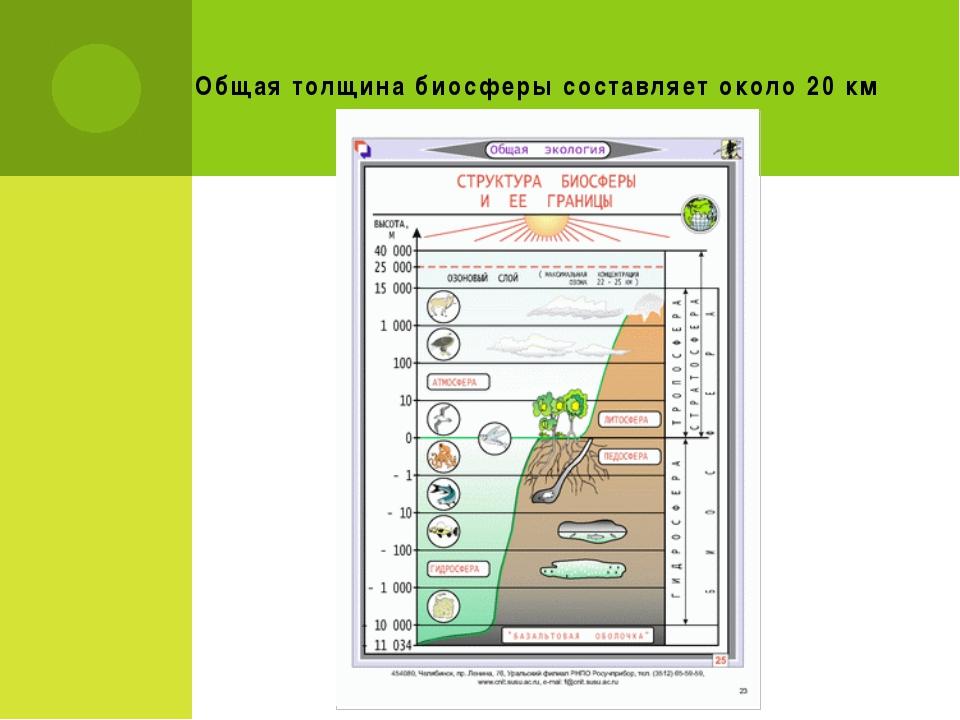 Общая толщина биосферы составляет около 20 км