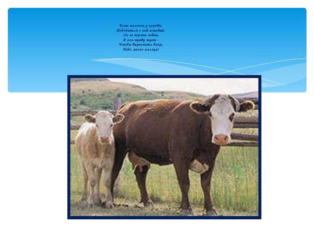 Есть теленок у коровы, Пободаться с ней готовый. Он ее играть зовет, А она тр...