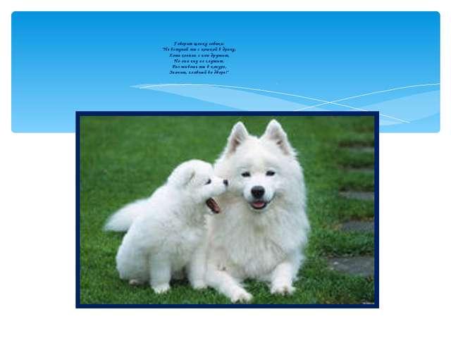 """Говорит щенку собака: """"Не вступай ты с кошкой в драку, Хоть хозяин с нею друж..."""