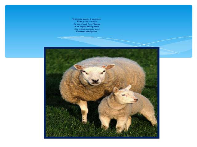 У ягненка шерсть в колечках, Мама у него - овечка. Он за ней след в след бежи...