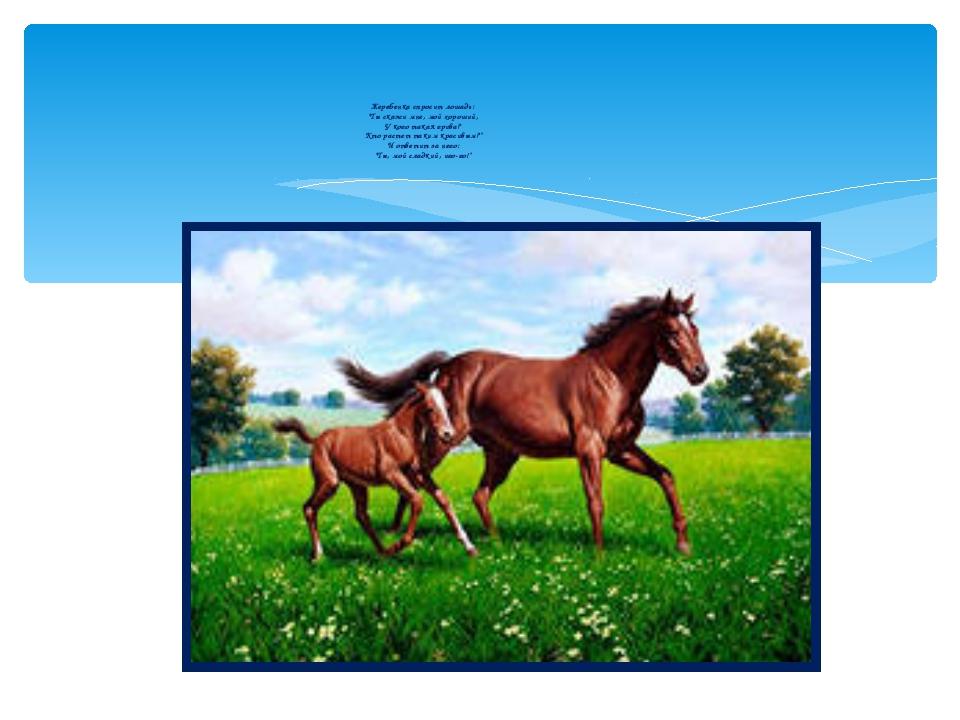 """Жеребенка спросит лошадь: """"Ты скажи мне, мой хороший, У кого такая грива? Кто..."""