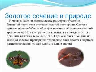 Золотое сечение в природе У многих бабочек соотношение размеров грудной и брю