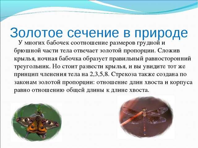 Золотое сечение в природе У многих бабочек соотношение размеров грудной и брю...