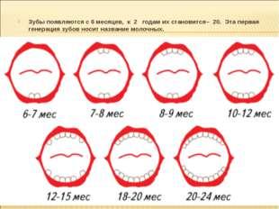 Зубы появляются с 6 месяцев, к 2 годам их становится– 20. Эта первая генераци