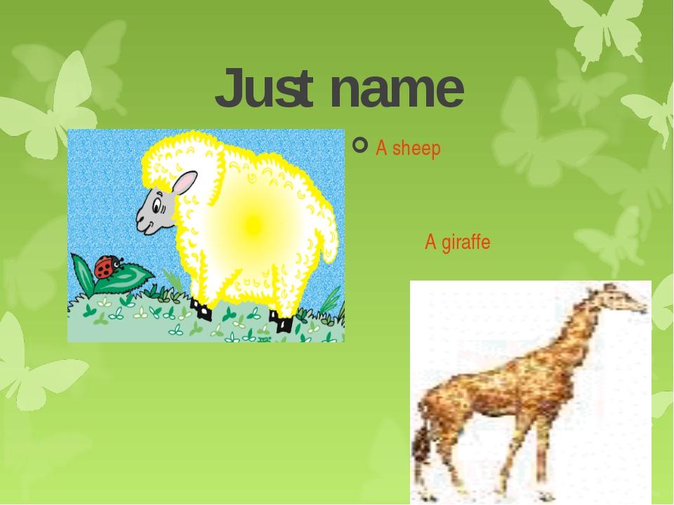 Just name A sheep A giraffe