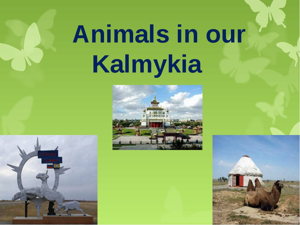 Animals in our Kalmykia