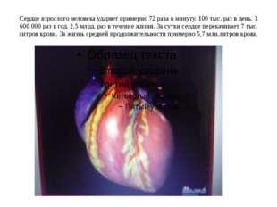 Сердце взрослого человека ударяет примерно 72 раза в минуту, 100 тыс. раз в д