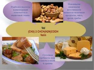Val (CH3) 2 CHCH(H2N)COOH Valin Наиболее высокая концентрация отмечается в м