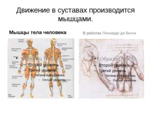 Движение в суставах производится мышцами. Мышцы тела человека В работах Леона